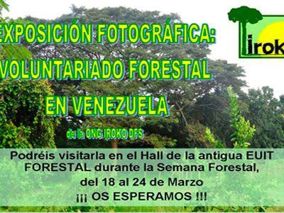 Iroko en la semana forestal de la EUITF