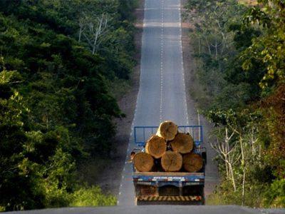 Cambios en el uso del suelo y silvicultura